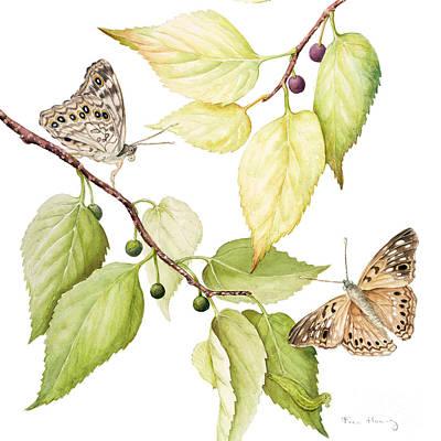 Hackberry Emperor Butterfly Original by Fran Henig