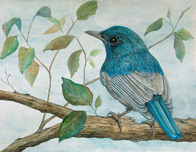 Hainan Blue Flycatcher Original by Sandy Clift