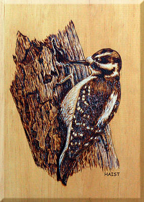 Hairy Woodpecker Original by Ron Haist