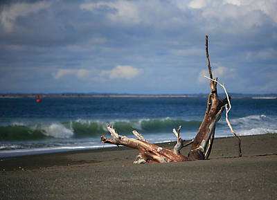 Halfmoon Bay Driftwood Print by Mike Coverdale