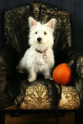Photograph - Halloween Dog by Amanda Stadther