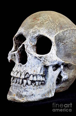 Photograph - Halloween Skull Series On Black - 1 by Mary Deal