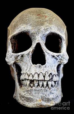 Photograph - Halloween Skull Series On Black - 2 by Mary Deal