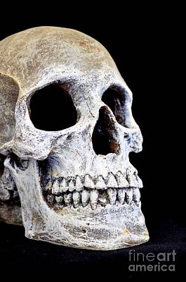 Photograph - Halloween Skull Series On Black - 3 by Mary Deal