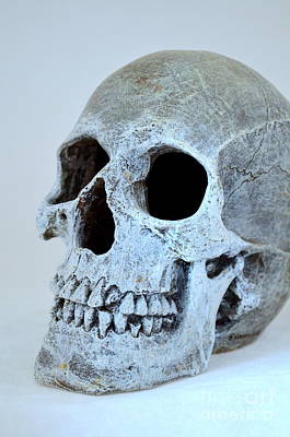 Photograph - Halloween Skull Series On White - 1 by Mary Deal