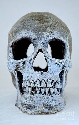 Photograph - Halloween Skull Series On White - 2 by Mary Deal