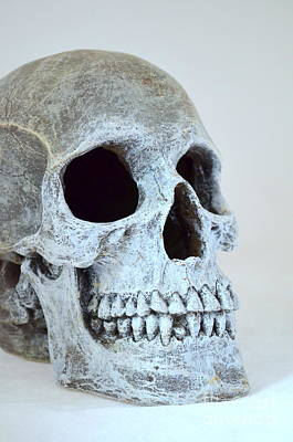 Photograph - Halloween Skull Series On White - 3 by Mary Deal