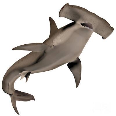 Hammerhead Shark Digital Art - Hammerhead Shark by Corey Ford