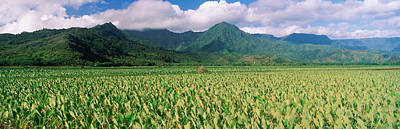 Hanalei Photograph - Hanalei Valley, Hawaii by Panoramic Images