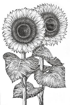 Sunflowers Drawing - Hand Drawn Image Of Two Sunflowers by Evelyn Sichrovsky