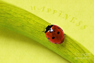 Ladybug Mixed Media - Happiness by Angela Doelling AD DESIGN Photo and PhotoArt
