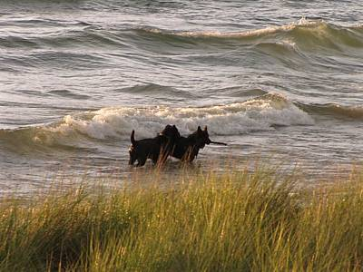 Happiness Is Playing In Lake Michigan  Print by Jane Greiner