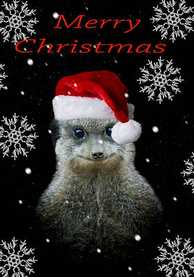 Meerkat Photograph - Happy Christmas by Paul Neville