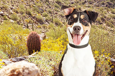 Holiday Cacti Photograph - Happy Dog Hiking In Arizona Desert by Susan Schmitz