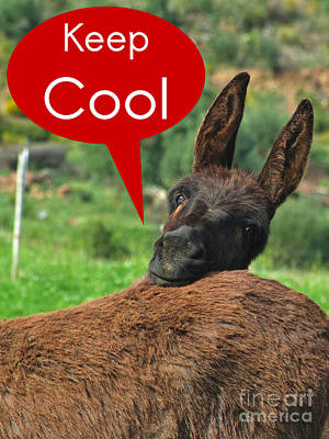 Donkey Photograph - Happy Donkey - Keep Cool by Angelo DeVal