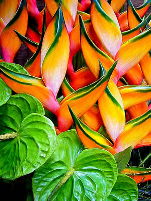 Flowers Painting - Happy Heliconia by Bruce Nutting