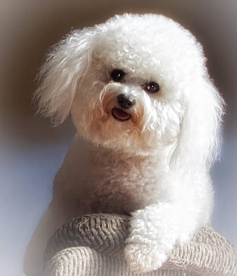 Pup Digital Art - Happy by Lynn Andrews