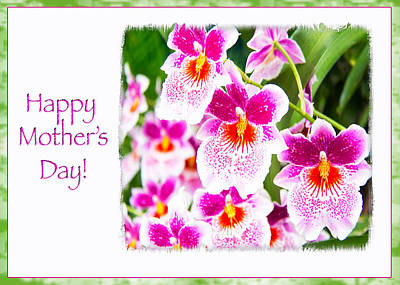 Happy Mother's Day Pink Cattleya  Orchids Print by Daphne Sampson