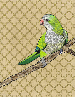 Parakeet Mixed Media - Harold by Jacqueline Bevan