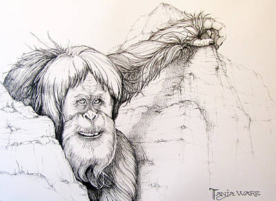 Orangutan Drawing - Harry by Tanja Ware