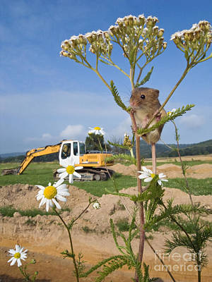 Mouse Photograph - Harvest Mouse And Backhoe by Jean-Louis Klein & Marie-Luce Hubert