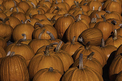 Gathered Photograph - Harvest Pumpkins by Garry Gay