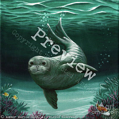 Hawaiian Monk Seal Original by Amber Marine