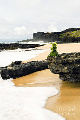Hawaiian Offering On Beach Print by Dana Edmunds - Printscapes