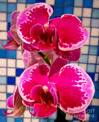 Hawaiian Orchid 1 Print by Randall Weidner