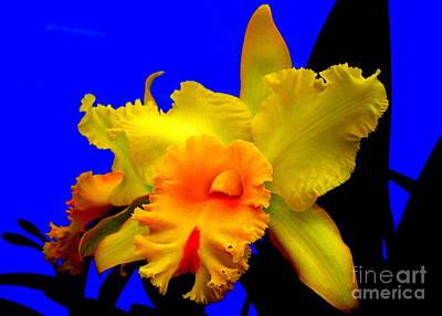 Hawaiian Orchid 15 Print by Randall Weidner