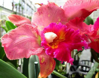 Hawaiian Orchid 20 Print by Randall Weidner
