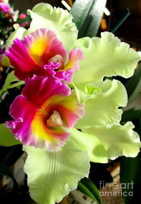 Hawaiian Orchid 28 Print by Randall Weidner