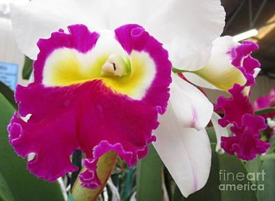 Hawaiian Orchid 4 Print by Randall Weidner