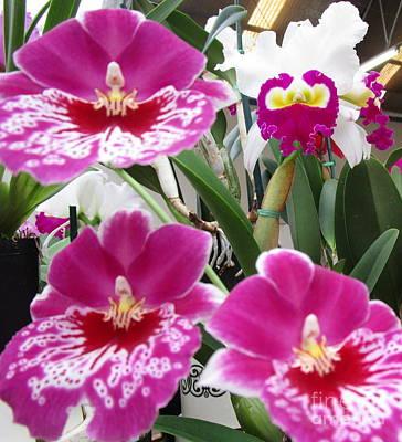 Hawaiian Orchid 5 Print by Randall Weidner
