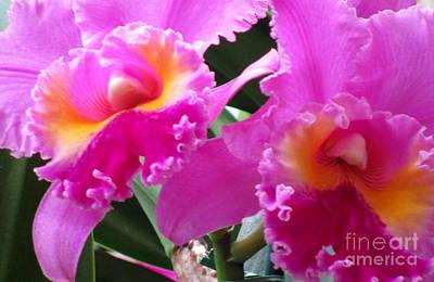 Hawaiian Orchid 6 Print by Randall Weidner