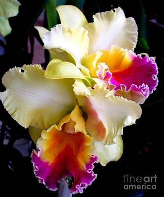 Hawaiian Orchid 7 Print by Randall Weidner