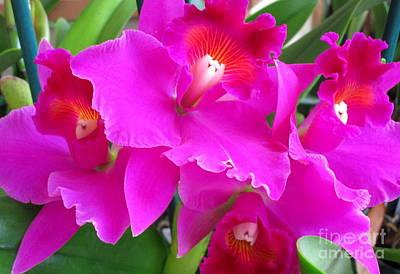 Hawaiian Orchid 8 Print by Randall Weidner