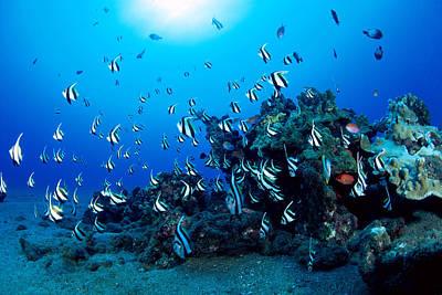 Undersea Photograph - Hawaiian Reef Scene by Dave Fleetham - Printscapes