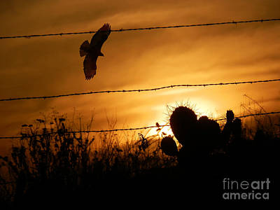 Red Tail Hawk Photograph - Hawk At Sunset by Robert Ball