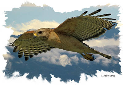 Hawk On The Wing Print by Larry Linton