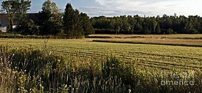 Maine Landscape Photograph - Haying by Catherine Melvin