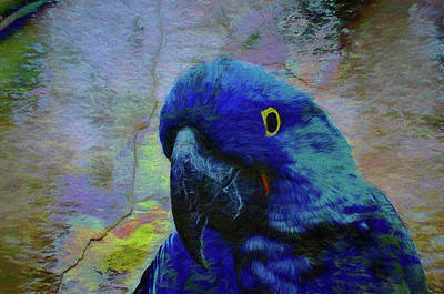 Macaw Digital Art - He Just Cracks Me Up by Jan Amiss Photography