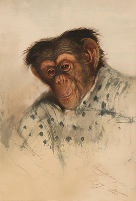 Chimpanzee Painting - Head Of A Chimpanzee by Mountain Dreams