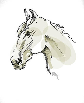 Horses Drawing - Head Sketch  by Paul Miller