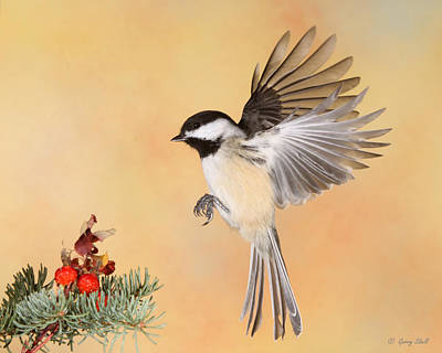Heading For The Rose Hips Print by Gerry Sibell