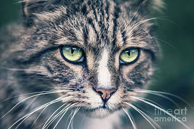 Photograph - Hear Me Roar by Evelina Kremsdorf