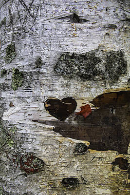 Heart Carved In Tree Print by Garry Gay