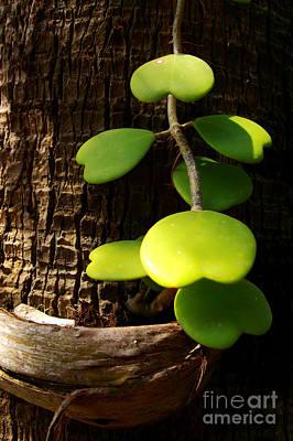 Heart Leaf In Park Original by Nutthawit Wiangya