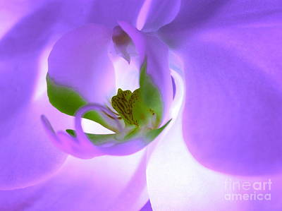 Pink Orchid Petals Photograph - Heart Wide Open by Krissy Katsimbras