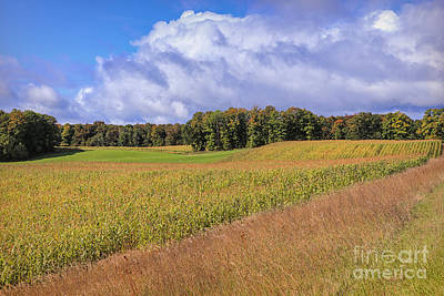 Heartland Harvest Days Print by Rachel Cohen
